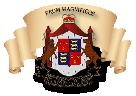 Magnificos Kingdom питомник лабрадоров
