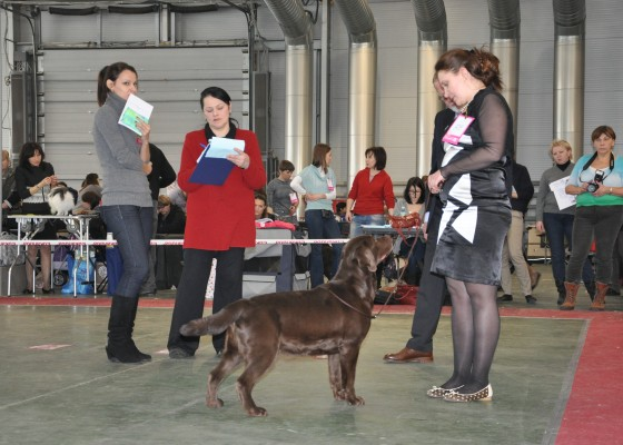 25th january 2014 Russian National Show Sabaneev Memorial 2014 (cert CAC, RKF CH)