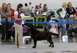 Russia-2014 International dog show CACIB Moscow