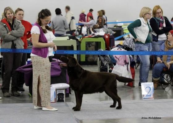 Россия- 2014 Интернациональная выставка собак CACIB Москва
