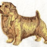 norfolk_terrier_-_i1191